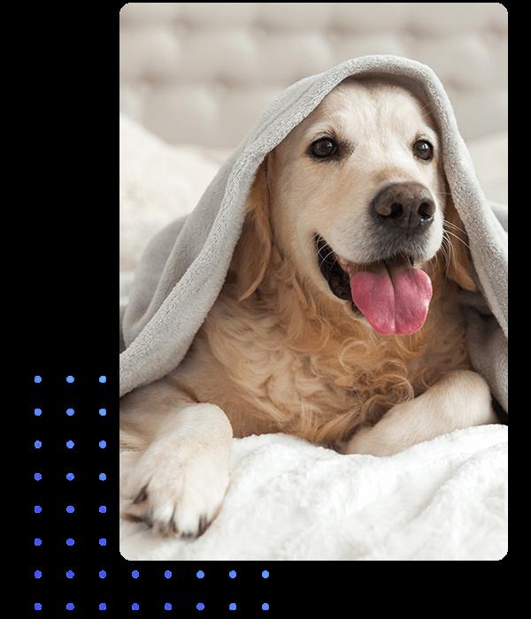 animaux-veterinaire-terwagne-uccle