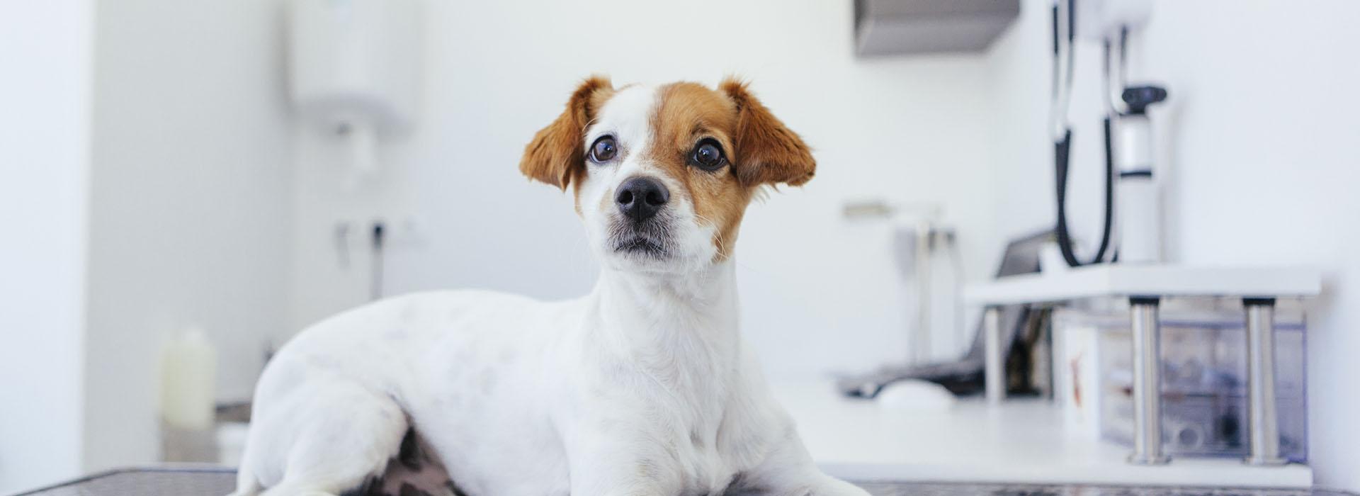cabinet-veterinaire-terwagne-uccle