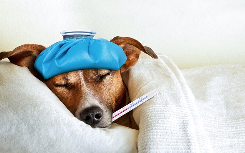 malade1-veterinaire-terwagne-uccle