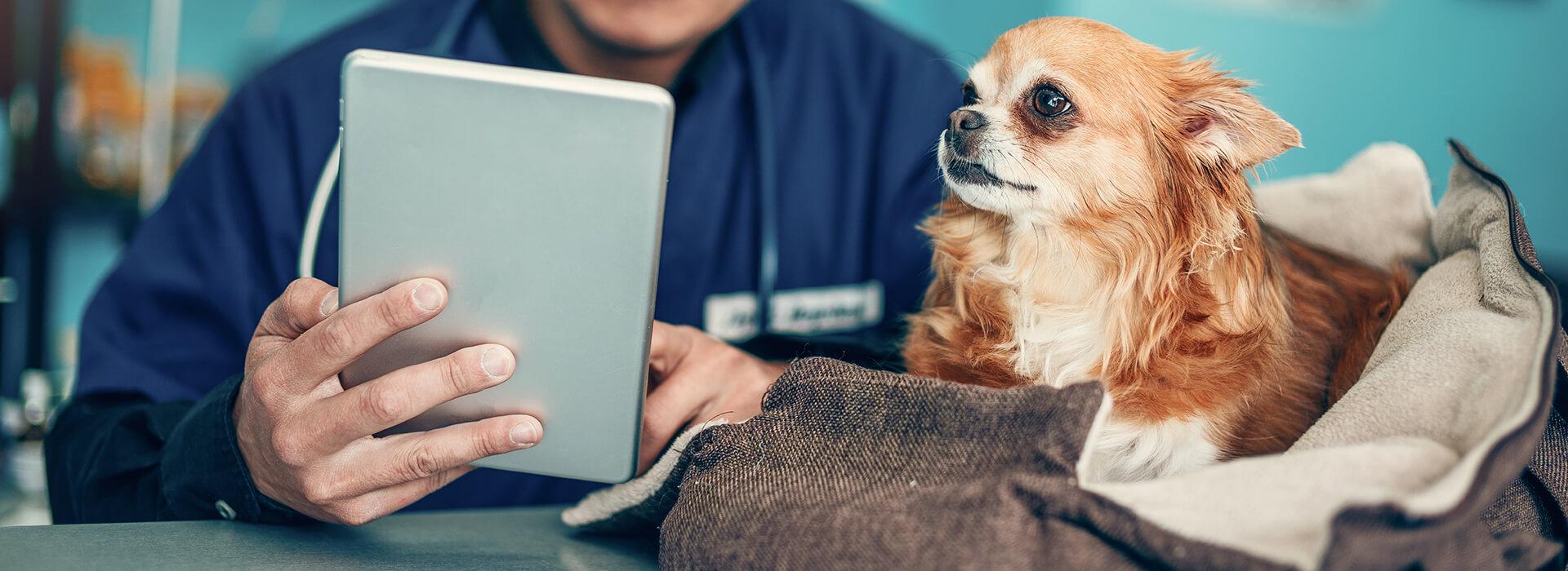 consultation1-veterinaire-terwagne-uccle